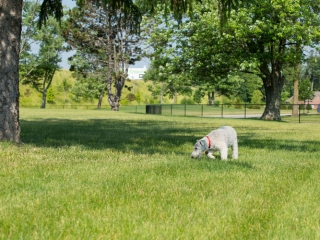 Dog Park at Hoosier Village
