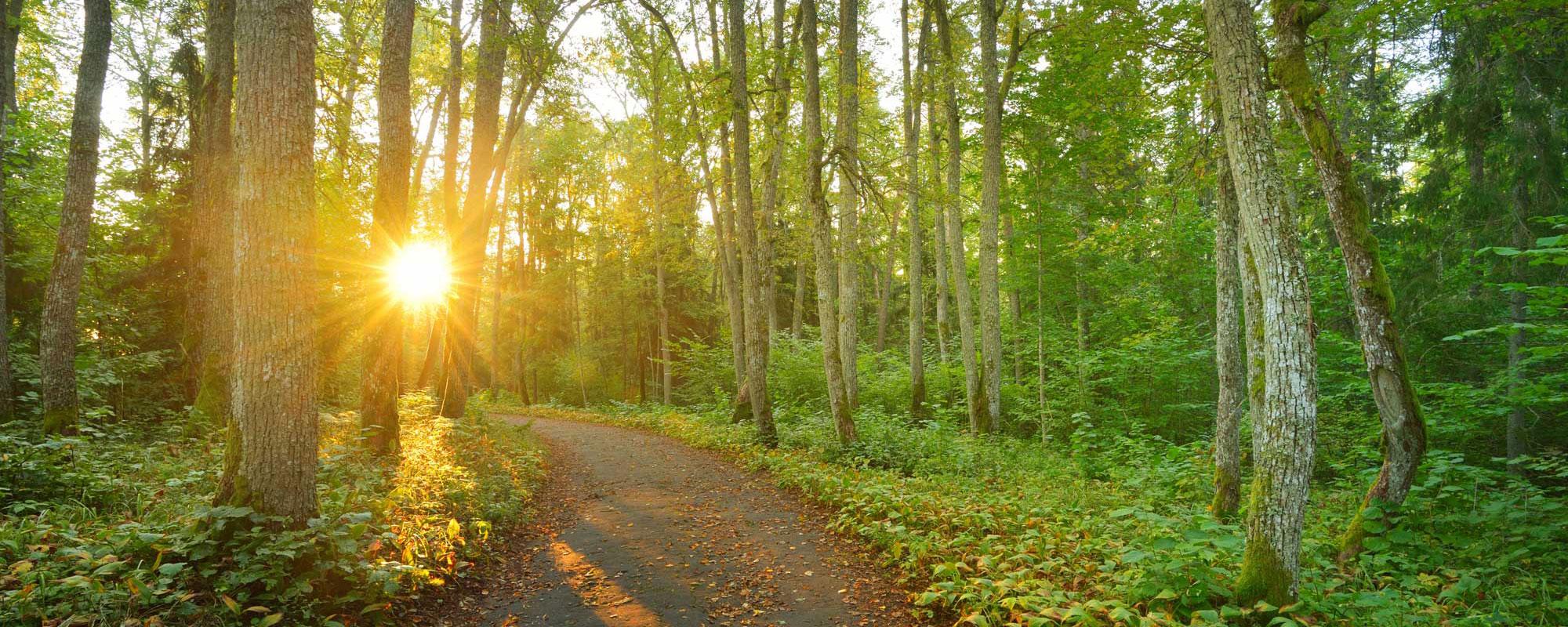 Slider Woods Path Sm Hoosier Village Retirement Community